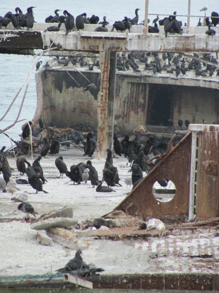 """""""SS PALO ALTO"""" fotografiat în 2010, înainte de a fi distrus complet de furtunile din 2017"""